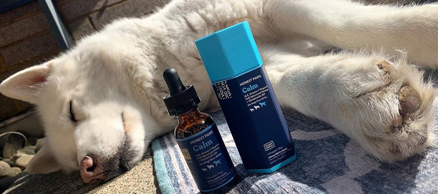 Buy Affordable CBD Products for Your Dogs